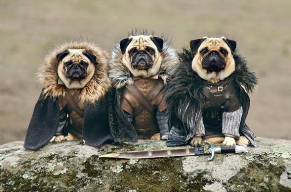 Game-Of-Thrones-Dogs